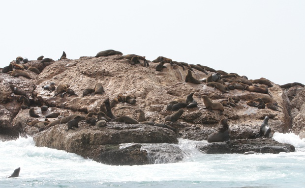 Seal Island Family Speedboat Trips